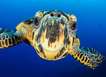Sea Turtles - Did you know?