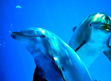 Dolphins - Did you know?