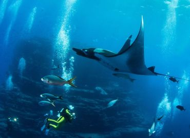 Mexico Creates North America's Largest Marine Protected Area