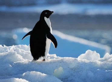 Massive Marine Protected Area Now a Haven for Antartic Wildlife